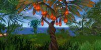 Лампионо-фрукт