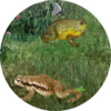 FrogMinutes-icon