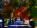 Thumbnail for version as of 05:32, November 11, 2012