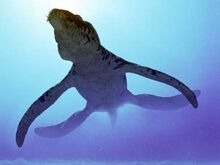 Liopleurodon g