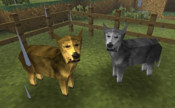 File:Wolf Coyote.jpg