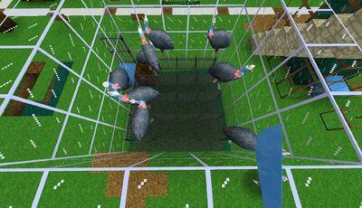 Cassowary Egg Farm