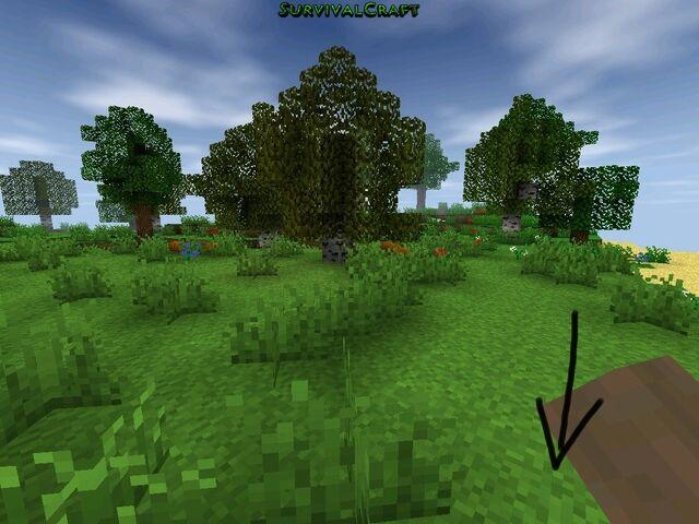 File:Pumpkin seed2.jpg