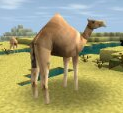 File:CAMEL.PNG
