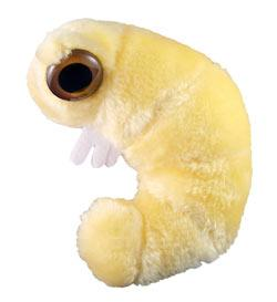 File:Giant Microbes! Bookworm.jpg