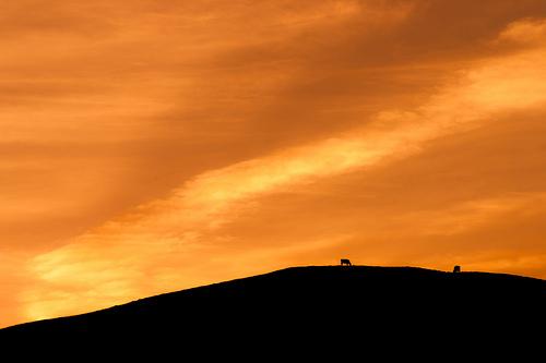 File:Crop Rotation (Sunset & Cows), Dorset.jpg