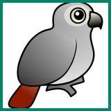 File:Greyparrot.jpg