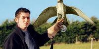 Cason Hawk