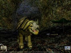 Pygmy torton cave 2