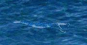 ColoClawFish