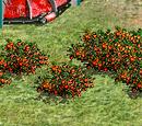 Muja Fruit Bush