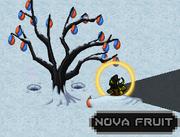 Nova fruit-tree