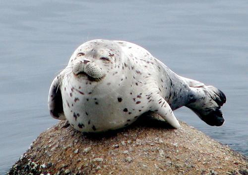 File:Happy-seal.jpg