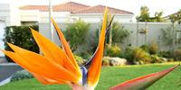 Bird of paradise (flower)