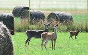 A deer family