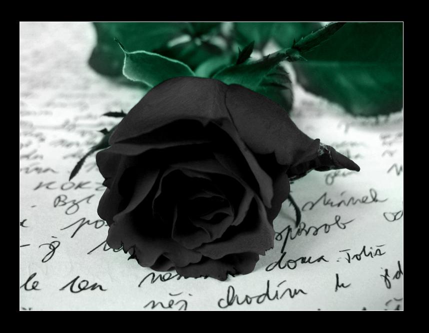 Black Rose Symbolism Wiki Fandom Powered By Wikia