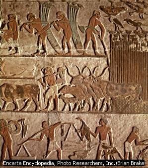 File:Agriculture Egypt2.jpg