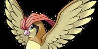 Pidgeotto (Pokémon)