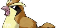 Pidgey (Pokémon)