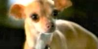 Taco Bell Chihuahua's Girlfriend