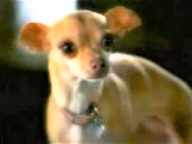 File:Taco Bell Chihuahua's Girlfriend.png