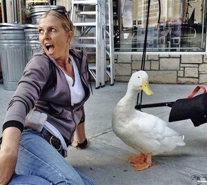 Sue-chipperton-aflac-duck