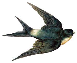 SwallowBird