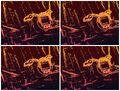Thumbnail for version as of 07:23, September 5, 2009