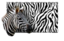 Safari Paint