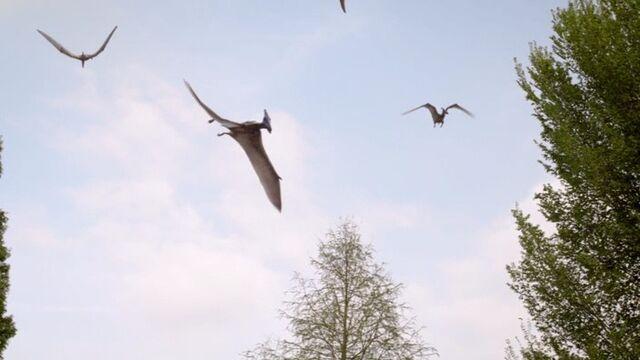 File:Pteranodons.jpg