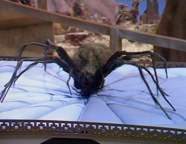 File:Queen Spider.jpg