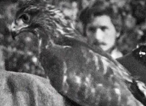 File:Hawk bird.jpg