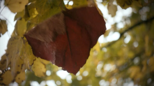 File:Leaf Rings.jpg