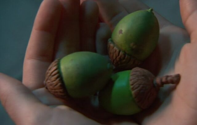 File:Acorns The Last Oak Tree.jpg