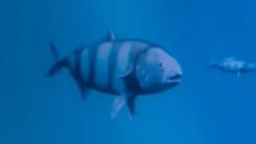 File:Pilot fish.jpg