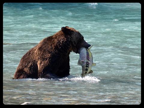 File:Bearwhale.jpeg