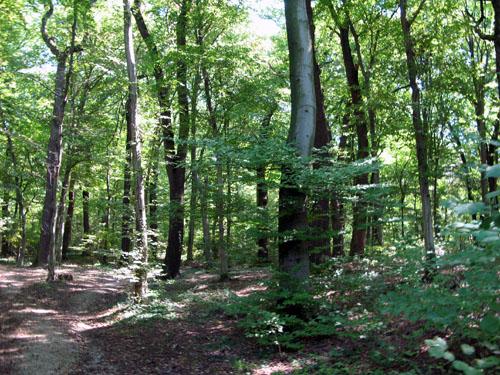 File:Forest3.jpg