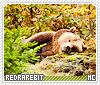 Redrarebit-animalia