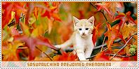 Sasurauchiha-phenomena b