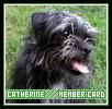 Catherine-intrinsic