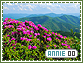 Annie-elements0