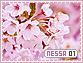 Nessa-elements1