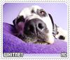 Whitney-animalia