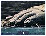 Andrea1-fellowship