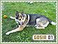 Gosia-elements1