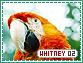 Whitney-elements2