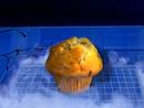 Muffin Freeza's ship