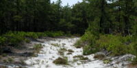Terraforming Pines