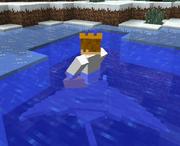 Manta ray riding