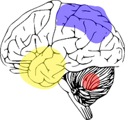 COOS brain affectation